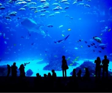Adventure Aquarium - Office du tourisme des USA